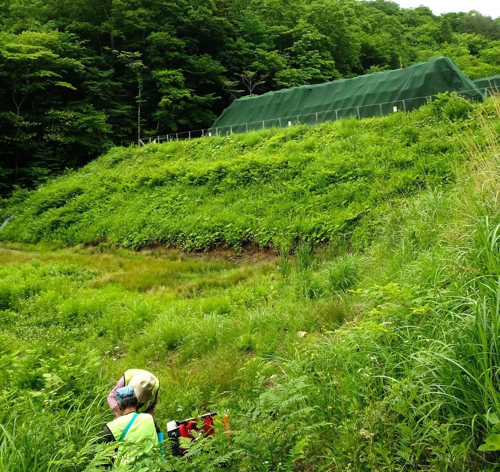A Katsurao, l'entrepôt provisoire est devenu un élément du paysage naturel