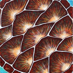 """Sea Turtle Shell"""