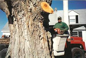 Owner Scott Drake in bucket truck near large tree in Fulton, NY