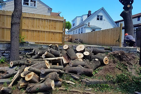 tree removed after storm damage