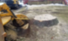 stump grinding 1_edited.jpg