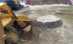 stump grinder in action