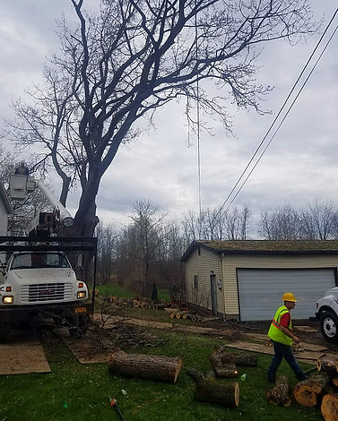 Tree limbs removed from tree hanging over roof