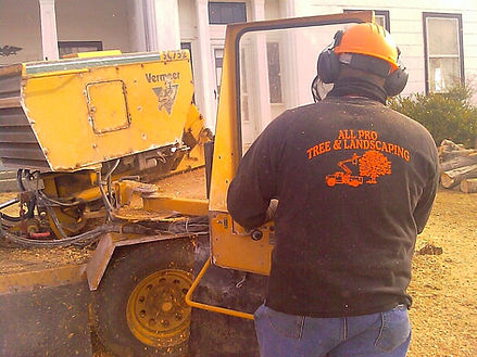 Owner Scott Drake using the stump grinder to remove a stump