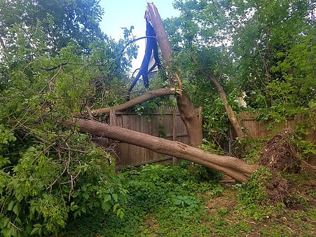 wind storm in NY uprotted trees and damaged fence