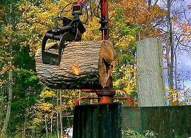 lifting a large tree trunk into a truck for removal