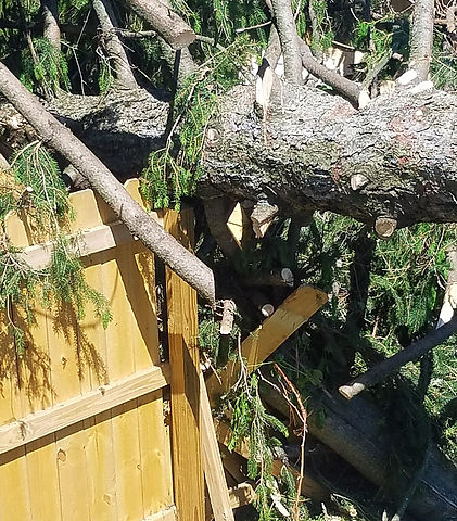 Tree crashed into house fence and caused damage