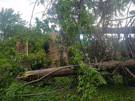 tree fell on house during storm