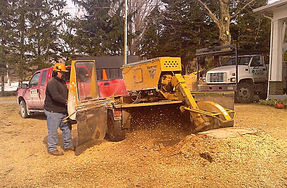 safely using a stump grinder to remove a tree stump