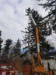 aerial bucket used to remove large tree