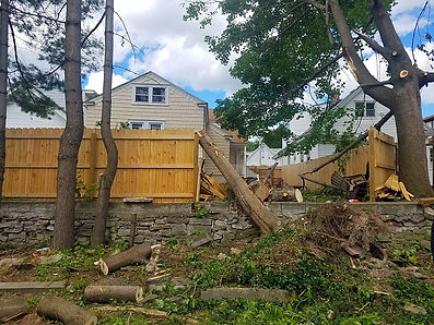strong winds uprooted tree and knocked out fence