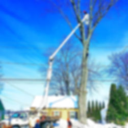 aerial bucket remove limbs from tree near power lines in NY