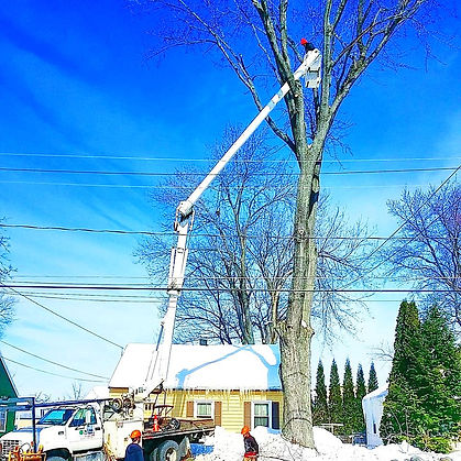 aerial bucket remove limbs from tree near power lines in NY