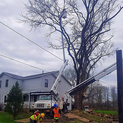 aerial bucket at work removing limbs from large tree
