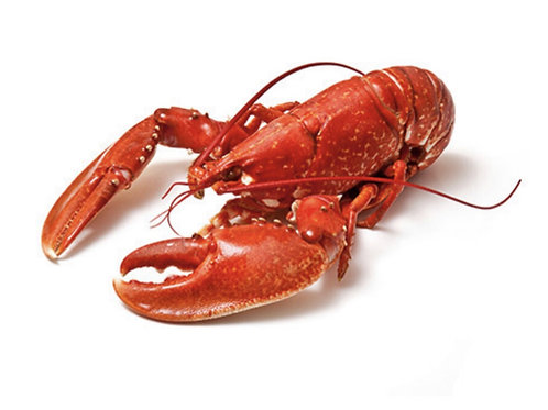 Cooked Lobster approx 600g