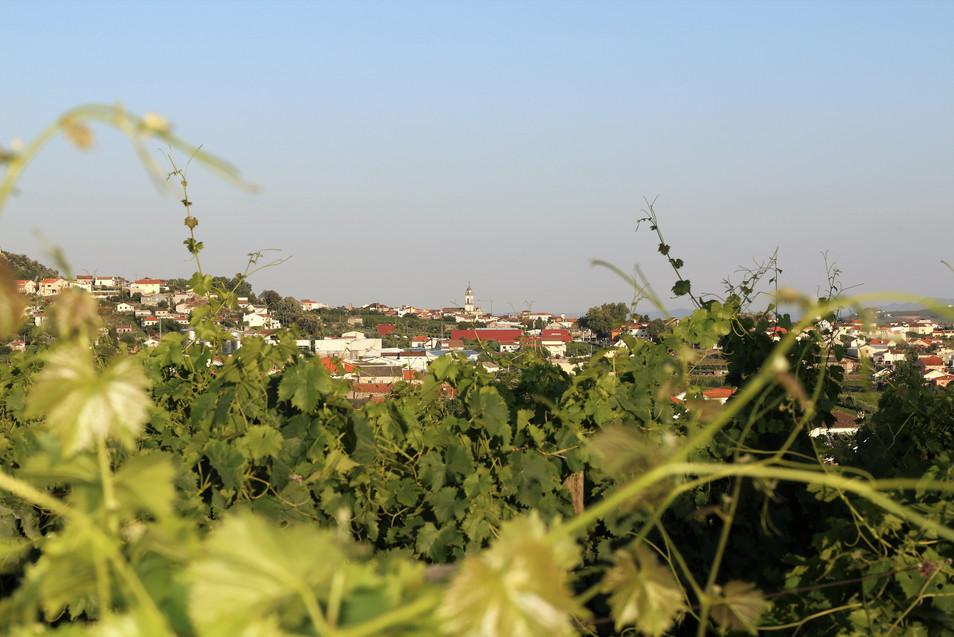 Vista de Favaios da Vinha da Tapada