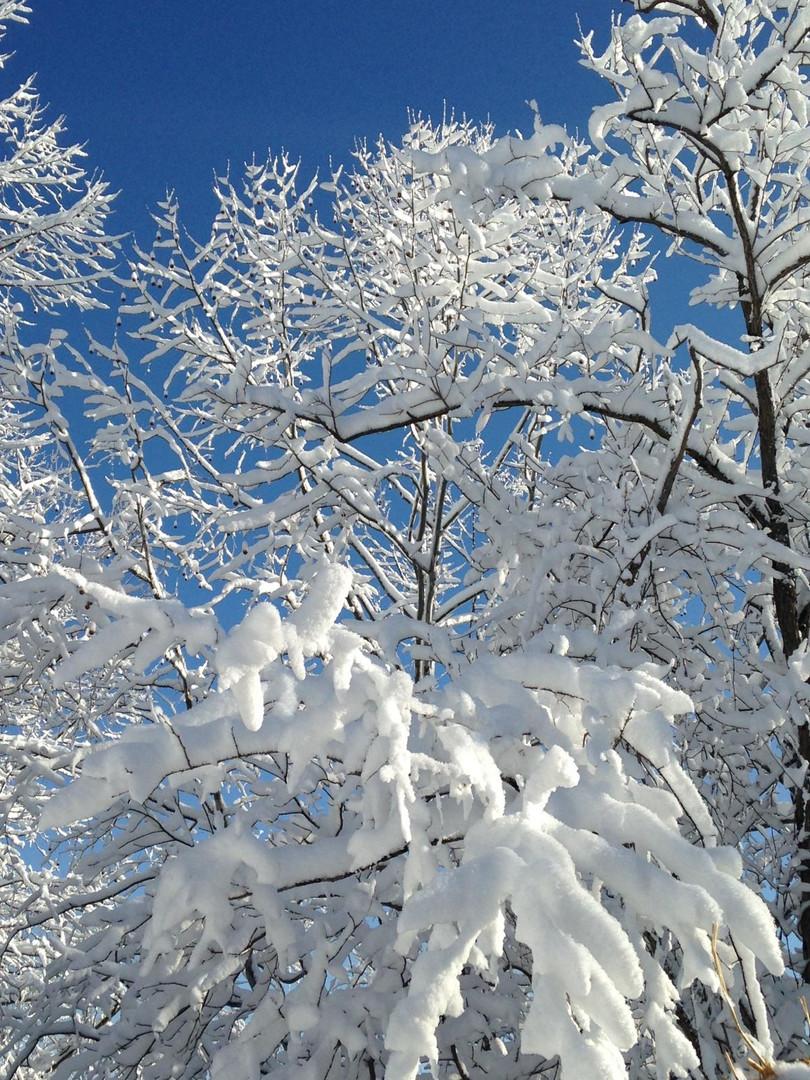 Winter in Mill Run