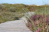 boardwalk-537113_1920.jpg
