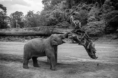 Thailand Photo of Baby Elephant in Elephant Nature Park