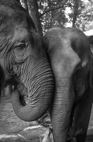 Marla Manes Photography Elephants at Elephant Nature Park