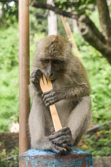 Marla Manes Photography Monkey on Krabi Island