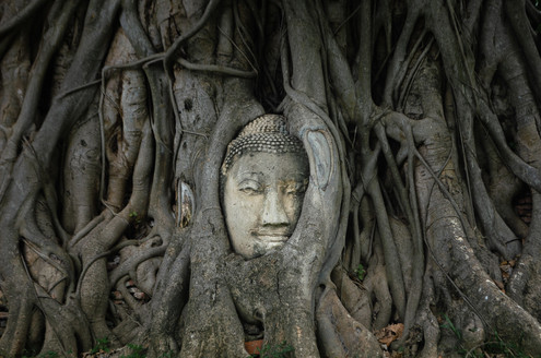 buddha head at ayutthaya