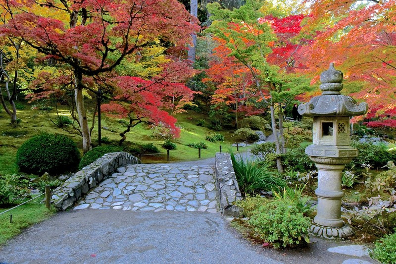 Seattle Japanese Garden fall colors and cute bridge for an elopement