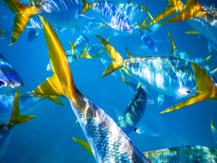 Fish Tails at the Great Barrier Reef