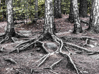 Of Roots and Family Trees