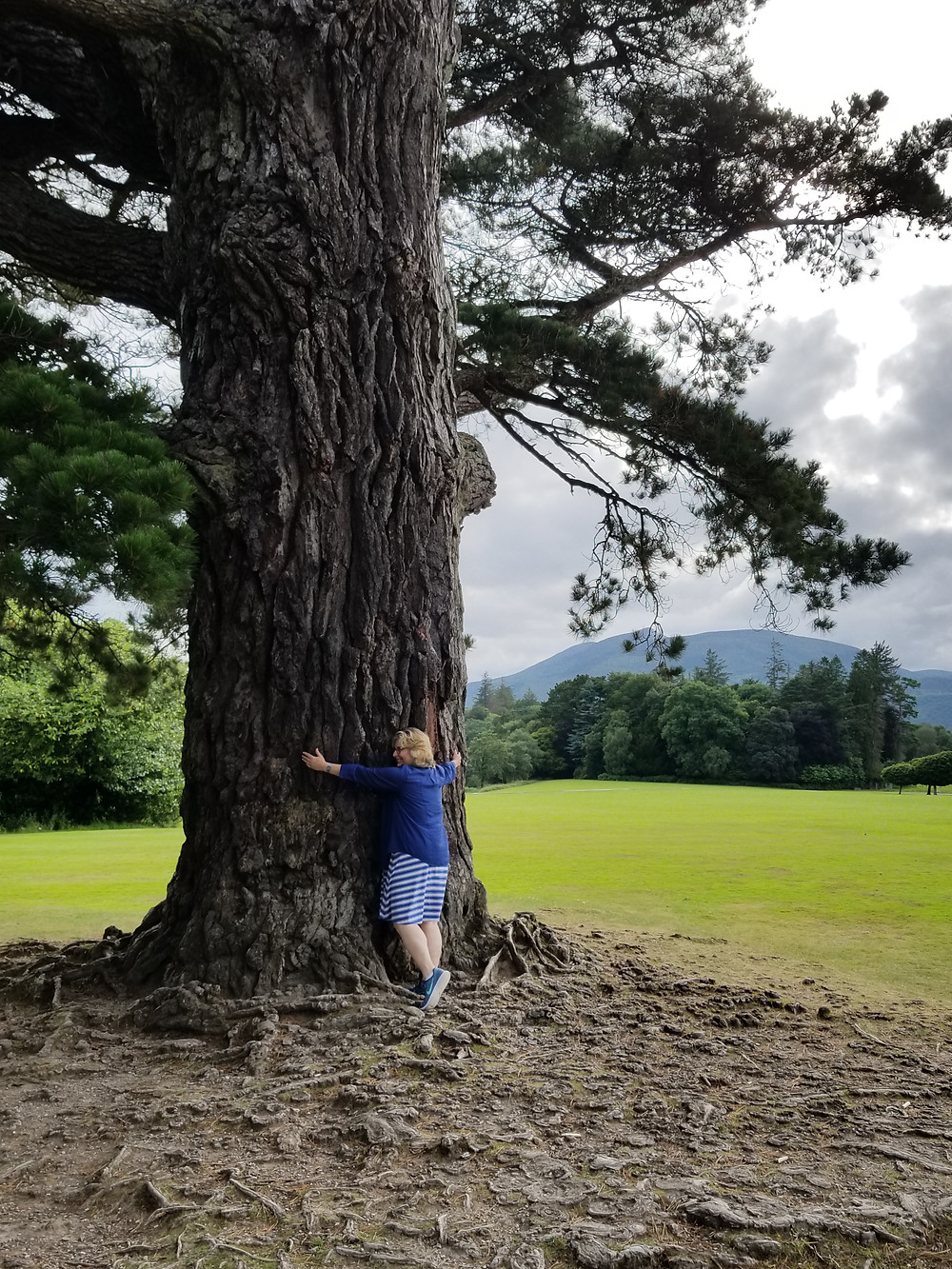 Killarney National Park, Muckross House, cypress ( with tree hugger, me).