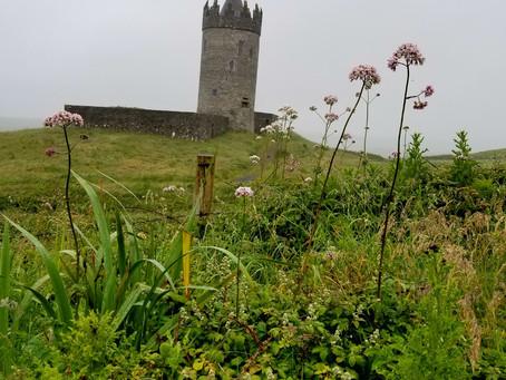 Irish herbs are smiling