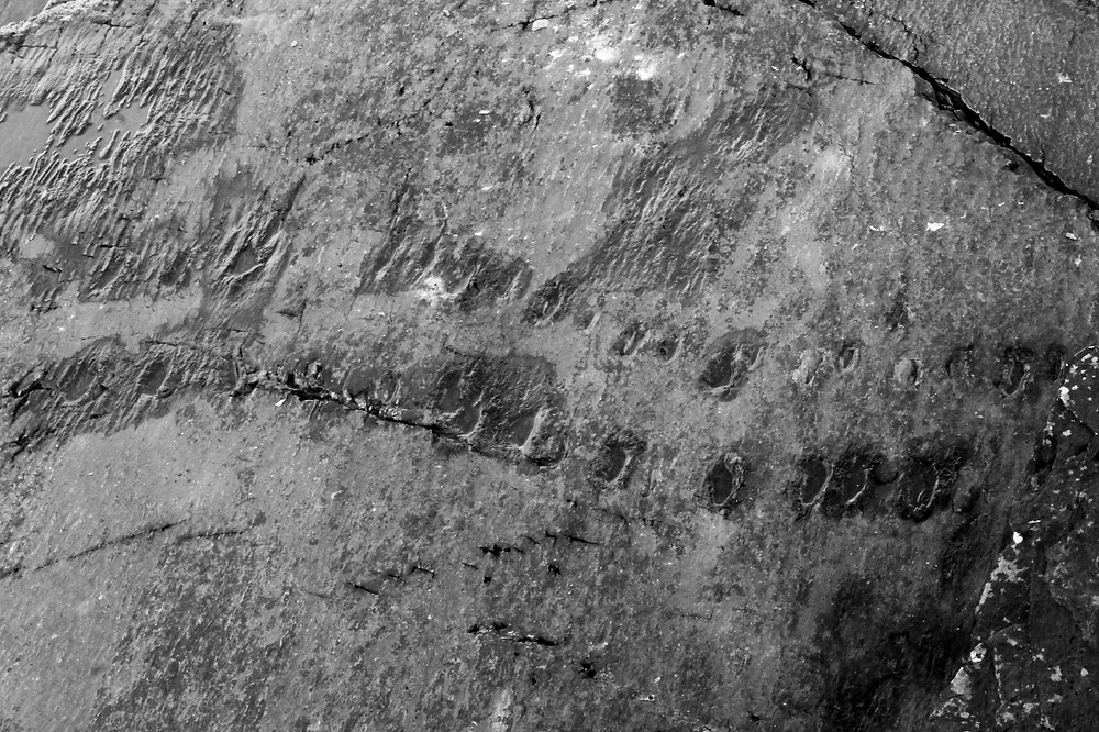 Tetrapod Footprints on rock
