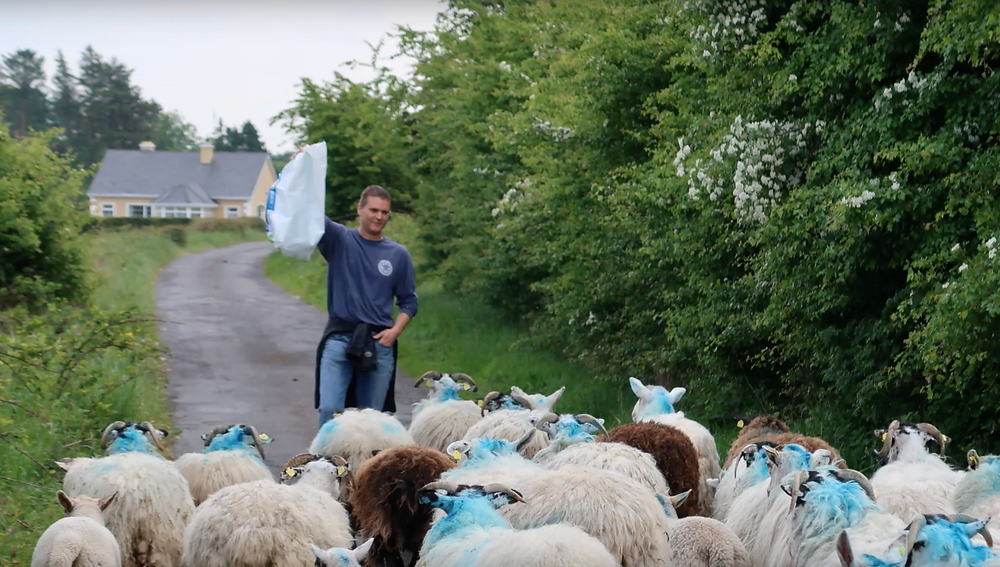 Farm tour Ireland