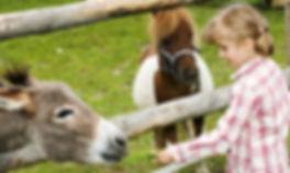 Newgrand tour - open farm