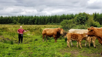 Visit a working farm in Ireland