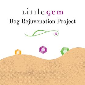 Little Gem Bog Rejuvenation Project.png