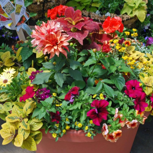 Seasonal Potted Plants