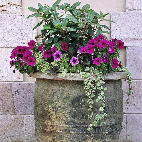 Seasonal Potted Plants