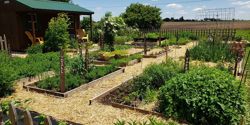 Growing, Harvesting & Using Culinary Herbs