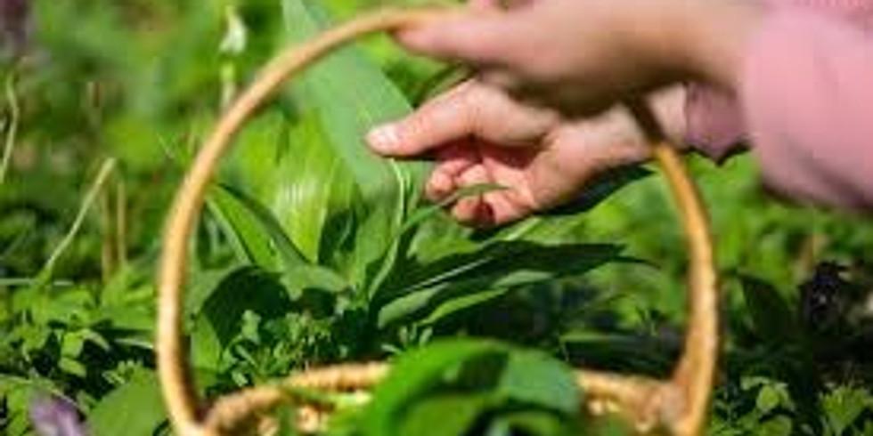 "Foraging Walk to Explore Edible & Medicinal ""Weeds"""