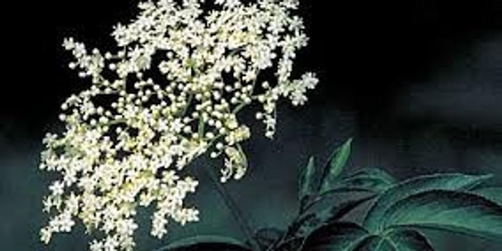 Elder Flower Day
