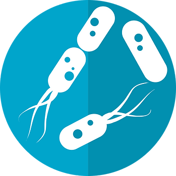 bacteria-icon-2316230_1280.png