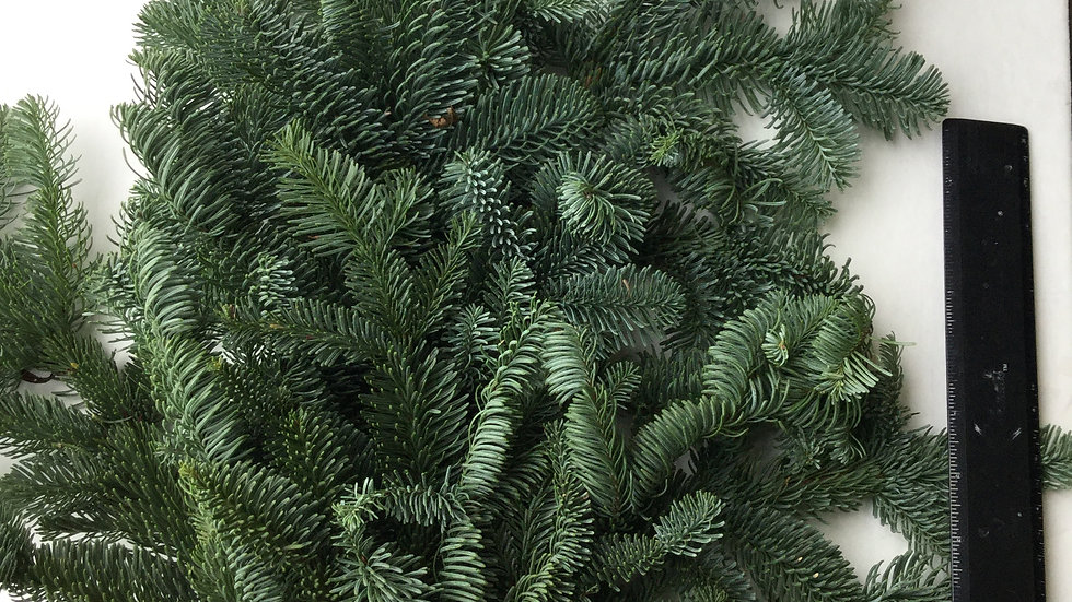 Noble Fir (Bunched)