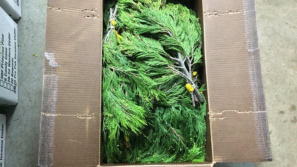 Incense Cedar (Bunched)
