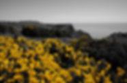Gower Coast, Wales