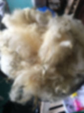 dirty fleece.JPG