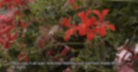 Kolibri_edited.jpg