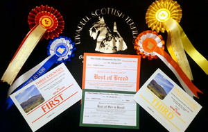 Best of Breed Three Counties - Divadell Fly Me To The Moon
