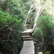 Boardwalk, Wilderness National Park