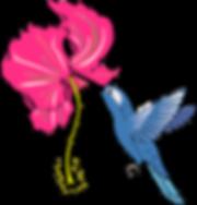fleur d'hibiscus et colibri